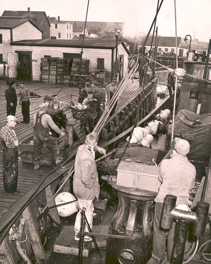 Unloading record catch of herring at Cheticamp