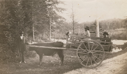 Group with ox cart, Preston, N.S.