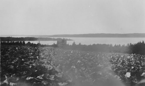 Cabbage field, Island off Lunenburg