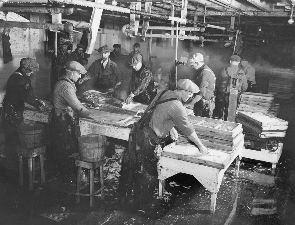 Workers Filleting Fish inside Maritime National Fish Limited Plant, Halifax, 1942