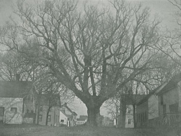 ''Old Willow. St. George Street''